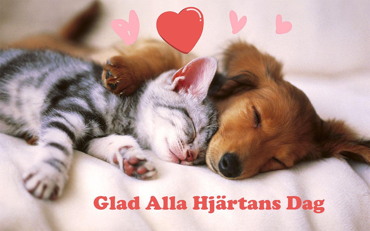 Glad alla hjärtans dag kort